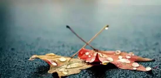 流浪的叶子 小提琴曲 片片枫叶情