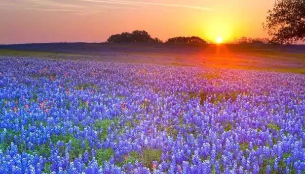 小提琴曲 情深无边 送来清晨的宁静与美好