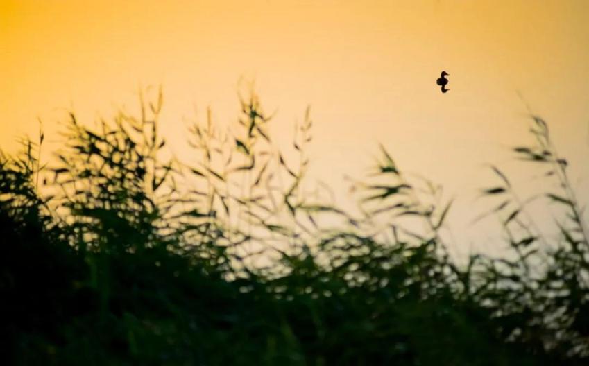 朗诵:灵魂之美,来源于心深处的善良